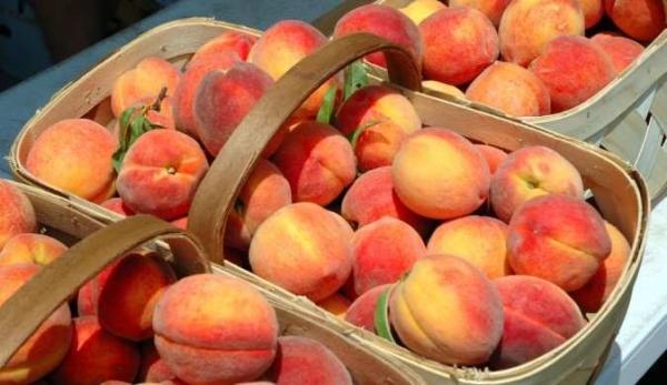 Персик на севере украины
