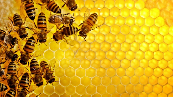 Виды меда: какой самый полезный