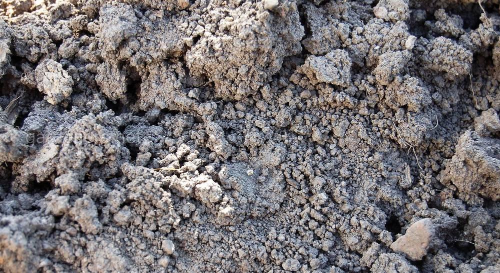 В россии на черноземных почвах в основном выращивают    В нечерноземье выращивают