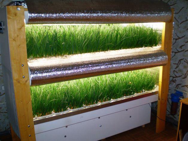 Выращиваем шампиньоны в домашних