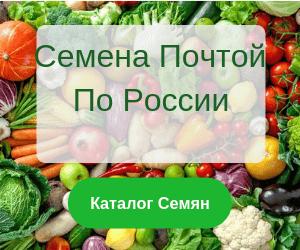 Сорта салатов листовых без горечи