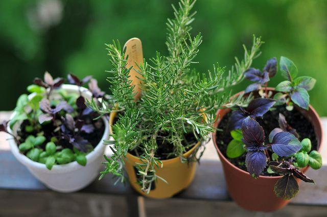 Что можно выращивать дома круглый год