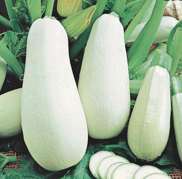 """Семена Кабачок цуккини """"Мячик"""", 1 г (3975791) - Купить по цене от 9.00 руб."""