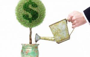 Сажаем денежное дерево и пересаживаем по мере роста привлекаем деньги в дом