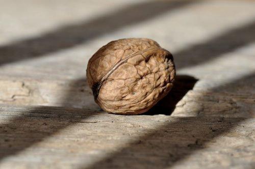 Грецкий орех – как вырастить из плода в домашних условиях