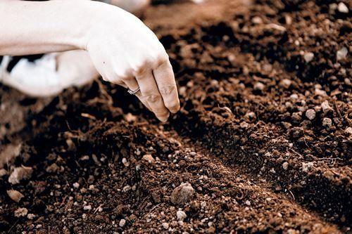 Как вырастить лаванду из семян в домашних условиях – подробное руководство с фото [2019]