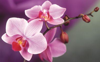 Какое окно лучше для орхидеи