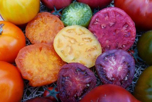 Сорта томатов фирмы седек