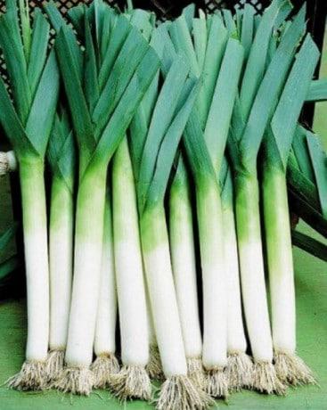 Лук на зелень зимой в теплице все тонкости