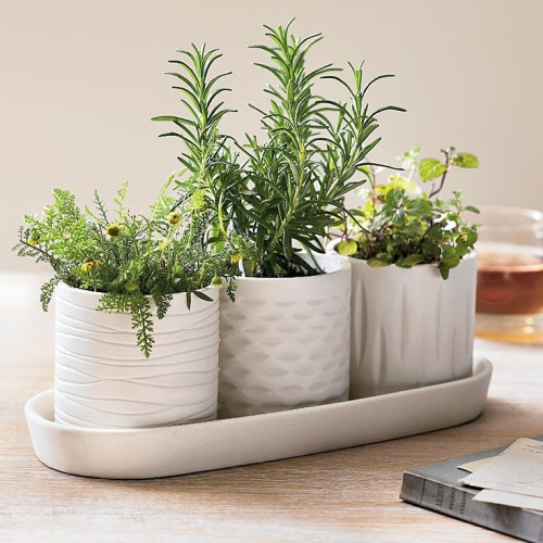 Ароматные травы для сада. Как и какие ароматные специи и пряности можно вырастить на подоконнике