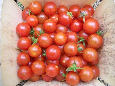 Как правильно выращивать помидоры черри в домашних условиях