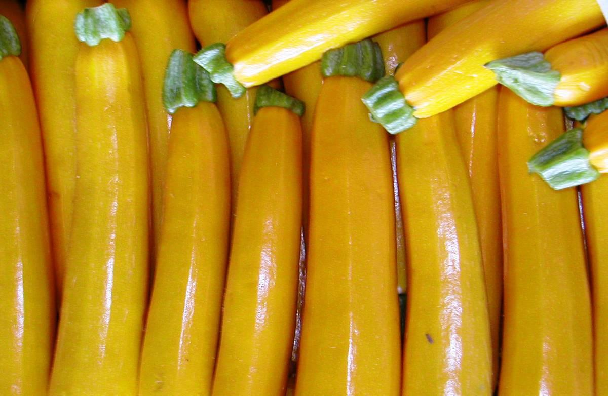 Кабачки желтого цвета сорт