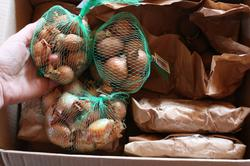 Сорта семейного лука для урала — Сайт про огород