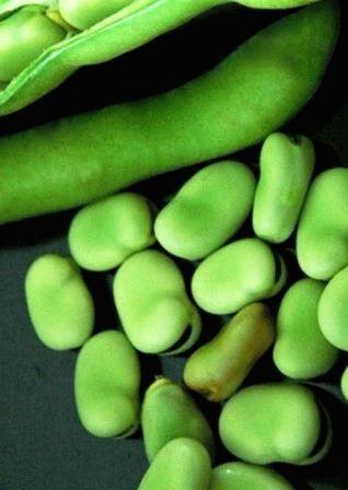 Разновидности и сорта бобов конские садовые декоративные крупноплодные овощные кормовые