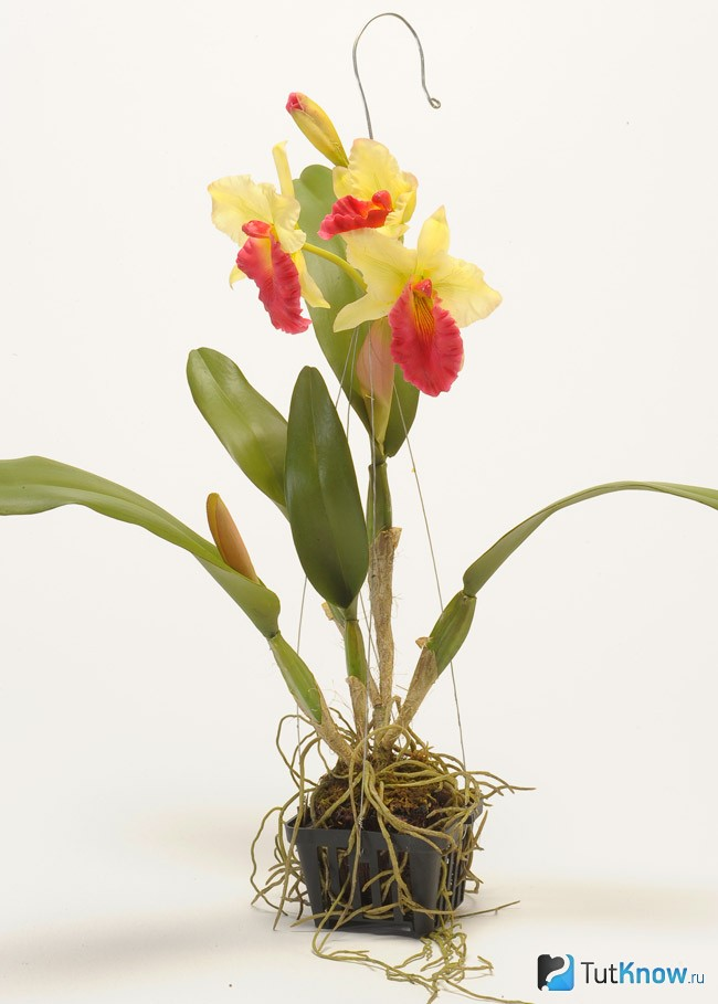 Орхидеи: уход в домашних условиях после покупки