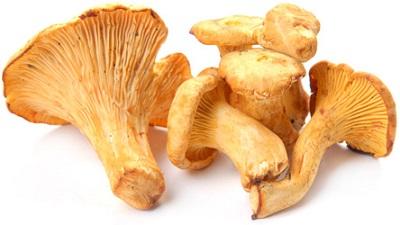 Домашняя грибница – набор для выращивания рыжиков, лисичек и опят в коробке