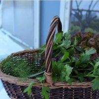 Парник для зелени зимой