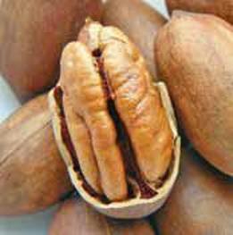 Посадка грецкого ореха осенью в средней полосе