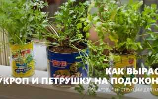 Как выращивать укроп и петрушку в домашних условиях на подоконнике?