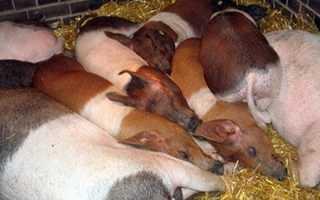 Каких животных лучше выращивать в деревне для бизнеса?