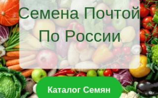 Лучшие сорта помидор сибири