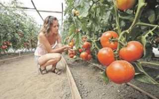 Можно ли выращивать рассаду томатов в торфяных горшочках?