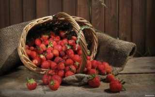 Как правильно выращивать клубнику в теплице круглый год?