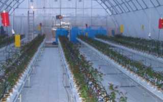 Можно ли выращивать огурцы в теплице круглый год?