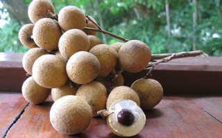 Как выращивать в домашних условиях лонган?