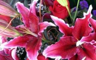 Лилии сорта лучшие сорта