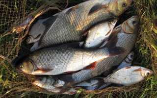 Какую рыбу лучше выращивать в домашних условиях?