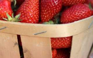 Как в домашних выращивать клубнику?