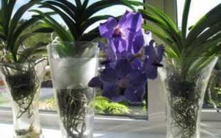 Какие орхидеи можно выращивать в стеклянной вазе?
