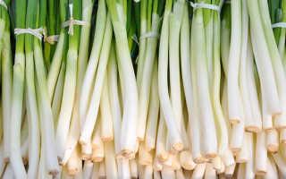 Выгодно ли выращивать лук на перо в теплице зимой