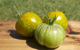 Лучшие сорта зеленых томатов