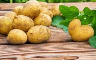 Лучшие сорта картофеля беларусь