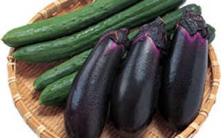 Можно ли выращивать баклажаны и огурцы в одной теплице?