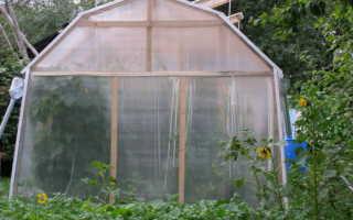 Что можно выращивать в теплице вместе с помидорами?