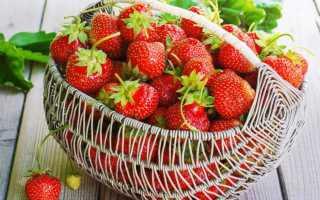 Лучшие сорта клубники выращивание