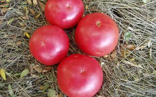 Лучшие сорта крупноплодных розовых томатов