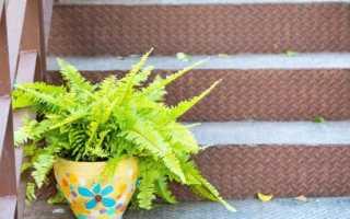 Можно ли выращивать папоротник дома приметы и суеверия?