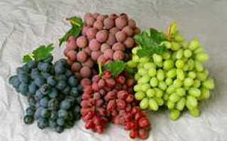 Лучшие сорта винограда молдавии
