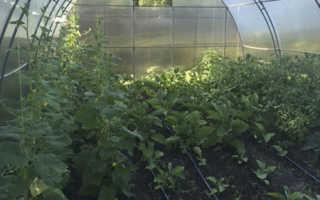 Как выращивать огурцы в теплице зимой из поликарбоната?
