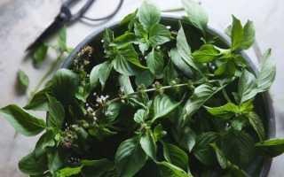 Какие пряные растения можно выращивать дома в горшках?