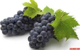 Лучший сорт черного винограда