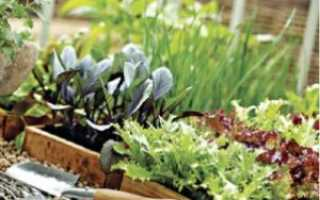Выращиваем овощи в домашних условиях