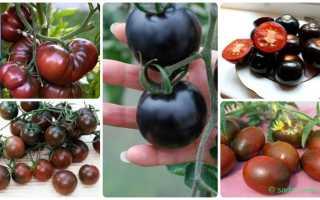 Лучшие сорта черноплодных томатов