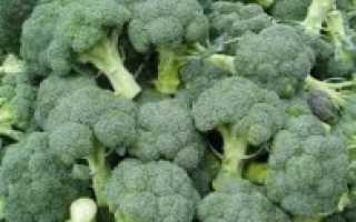 Как выращивать брокколи капусту в домашних условиях?