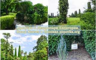 В дендрарии выращивали саженцы хвойных деревьев