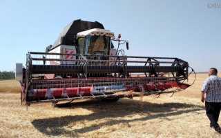 Какие сорта пшеницы выращивают в ростовской области?